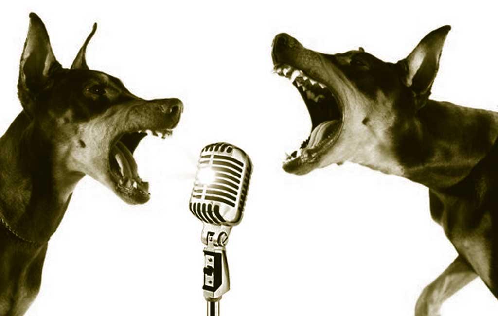 comprobando nivel de ruido perros