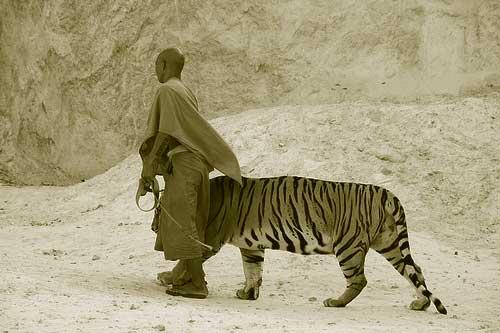 monje y tigre