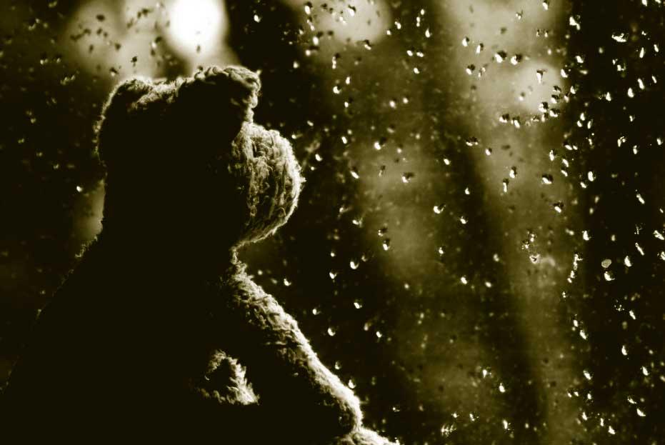 foto osito viendo llover tras los cristales