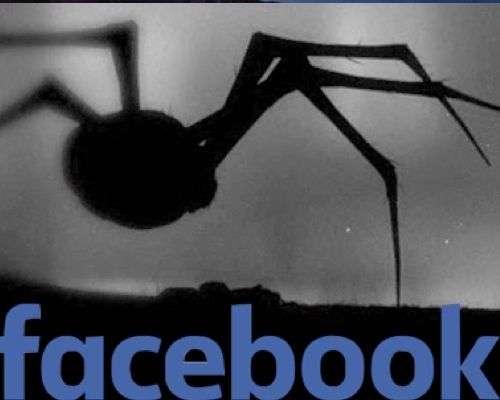 Arañafacebook